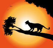 panther silhouette Royalty Free Stock Photos