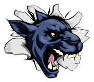 Panther sports mascot breakthrough Stock Image