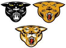 Panther,tiger and puma heads Royalty Free Stock Photo
