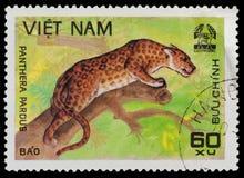 Panthera Imagem de Stock
