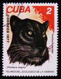 Panthera pardus, Reihe, circa 1977 Stockfotos