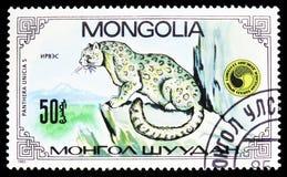 Panthera Uncia, serie del Snow Leopard de Uncias del Panthera, circa 1985 imagen de archivo