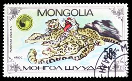 Panthera Uncia, serie del Snow Leopard de Uncias del Panthera, circa 1985 imagenes de archivo