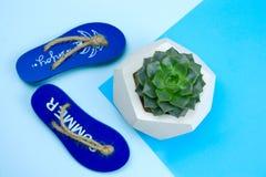 pantoufles décoratives et usine succulente sur un fond bleu photographie stock libre de droits