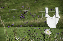 Pants drying on clothesline. Pants hanging to dry on a summer day Stock Images
