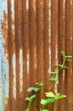 Panwiowa ośniedziała metal ściana Obrazy Stock