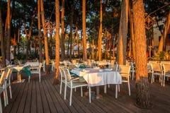 Pany uppsättningtabeller och sörjer träd på en utomhus- restaurang arkivfoton