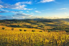 Panzano in Chianti vineyard and panorama at sunset. Tuscany, Italy. Panzano in Chianti vineyard and panorama at sunset in autumn. Tuscany, Italy Europe royalty free stock images