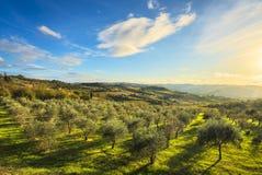Panzano dans le coucher du soleil d'oliviers et de vignoble de chianti La Toscane, AIE image stock