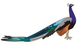 Paon d'oiseau illustration de vecteur