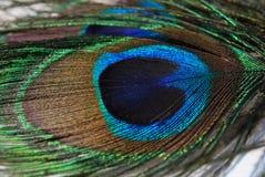 paon de clavette Photographie stock libre de droits