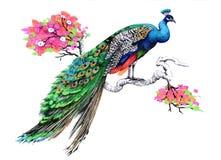 Paon de dessin d'aquarelle sur la branche d'arbre de floraison sur le fond blanc illustration de vecteur