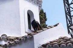 Paon sur la chapelle orthodoxe grecque sur l'île de souris sur l'île grecque de Corfou Photographie stock