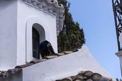 Paon sur la chapelle orthodoxe grecque sur l'île de souris sur l'île grecque de Corfou Photo stock