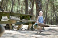 Paons de alimentation de fille adorable d'enfant en bas âge Photographie stock libre de droits