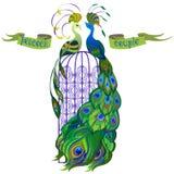 Paons de couples Ruban avec le texte Conception verte Image stock