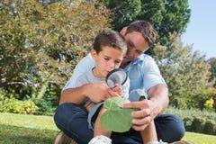 Papá alegre e hijo que examinan la hoja con una lupa Imágenes de archivo libres de regalías