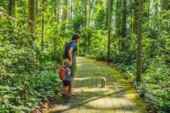 Papa en zoonsreizigers die Ubud-bos in Aapbos ontdekken, Bali Indonesië Het reizen met kinderenconcept stock afbeelding