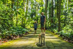 Papa en zoonsreizigers die Ubud-bos in Aapbos ontdekken, Bali Indonesië Het reizen met kinderenconcept stock foto's