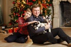 Papa et fils avec des chiots Husky Christmas s'asseyant sur un fond Image libre de droits