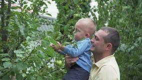Papa met zijn zoon in de boomgaard stock footage