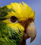 Papagaio 2 foto de stock