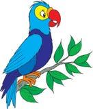 Papagaio Fotos de Stock
