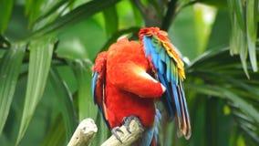 Papagaio video estoque
