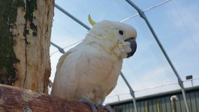 Papagaio Imagens de Stock