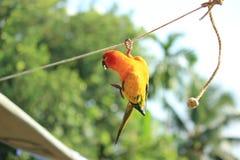 Papagaio foto de stock royalty free