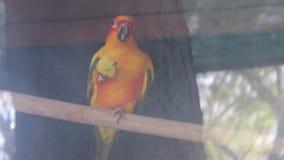 Papagaio filme