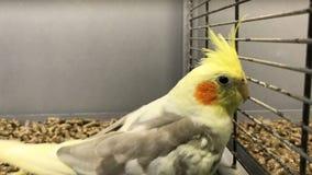 Papagaio amarelo bonito video estoque