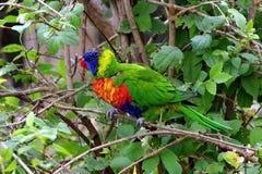 Papagaio, animais amigáveis no jardim zoológico de Praga Imagens de Stock Royalty Free