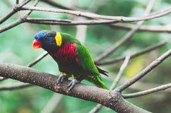 Papagaio, animal, pássaro, colorido, zen, jardim zoológico, Camboja, ruínas, exploração, desejo por viajar, férias, paz, tranquil fotografia de stock royalty free