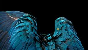 Papagaio bonito do pássaro do papagaio do macore isolado no fundo escuro fotografia de stock royalty free