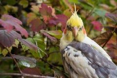 Papagaio bonito em uma árvore Fotografia de Stock Royalty Free