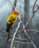 Papagaio colorido Imagens de Stock Royalty Free
