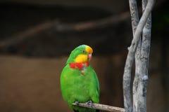 Papagaio colorido fotografia de stock royalty free
