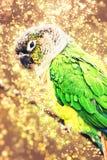 Papagaio colorido, foto cintilante Fotografia de Stock Royalty Free