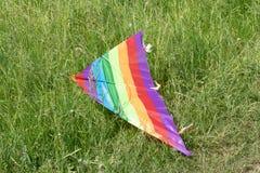 Papagaio colorido que encontra-se na grama verde fotos de stock