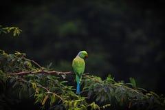 Papagaio com composição bonita da cor imagens de stock