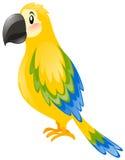 Papagaio com a pena amarela e azul Fotografia de Stock Royalty Free