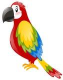 Papagaio com pena colorida Fotos de Stock