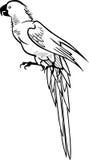 Papagaio com uma cauda longa ilustração royalty free