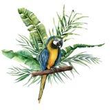 Papagaio da aquarela com folhas tropicais Papagaio pintado à mão com o ramo das hortaliças do monstera, da banana e da palma isol ilustração do vetor