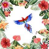 Papagaio da aquarela isolado em um fundo branco ilustração stock