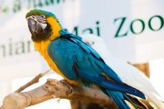Papagaio da arara foto de stock royalty free