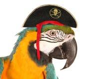 Papagaio da arara do pirata Foto de Stock Royalty Free