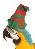 Papagaio da arara que veste um chapéu do duende do Natal Fotos de Stock Royalty Free