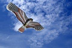 Papagaio da águia Foto de Stock